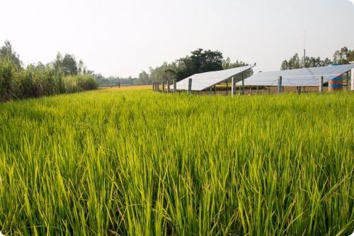 Ferme solaire au Bangladesh développée par Rahimafrooz Solar, évaluation faite par Sevea