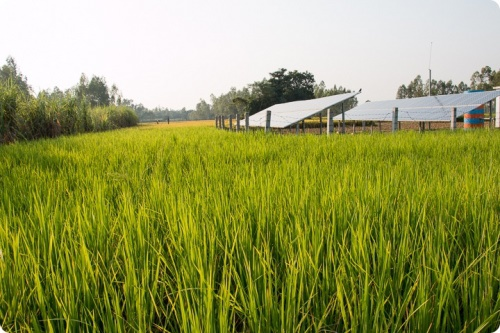 Solar farm in a rice field, Rahimafrooz Solar Project