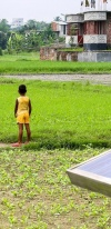 Solar Panel In A Rice Field With A Child
